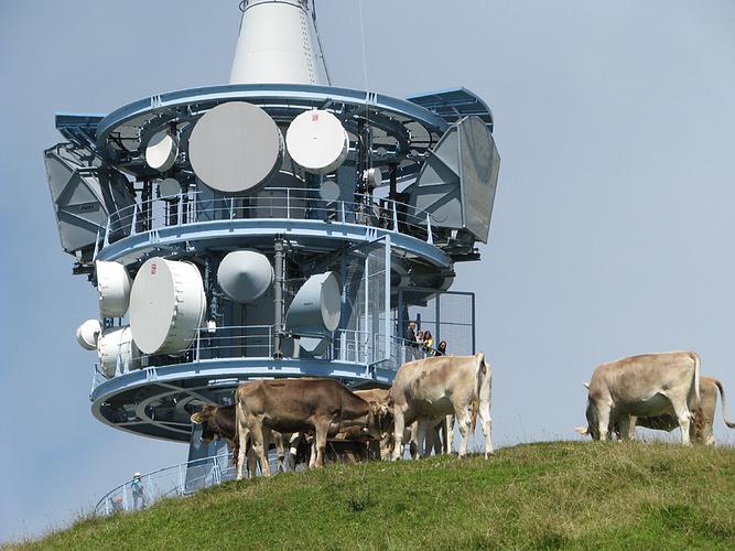 Ein Bild, das Gras, draußen, stehend, Kuh enthält.  Automatisch generierte Beschreibung