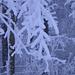 Kunstwerke aus Schnee und Eis