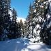 tief verschneit, aber auf dem Schnee lässt es sich diesmal gut laufen
