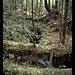 Cape Alava Trail, Ozette Loup, Olympic NP, Washington, USA