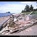 Bodelteh Islands, Beach Trail, Ozette Loup, Olympic NP, Washington, USA
