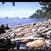Ozette Island (links) und Bodelteh Islands (Mitte) vom Beach Trail, Ozette Loup, Olympic NP, Washington, USA