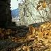 <br />Blätterfest im Heidenhaus<br /><br />Ich war auch eingeladen.<br /><br />Ich habe mich unter die Blätter gemischt.<br /><br />Ich liege am Boden und wälze mich in den Blättern hin und her.<br /><br />Das ist lustig.<br /><br />(Den Blättern hat's auch gefallen.)<br /><br />