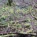 Bemooster Grund im Bois du Mormont