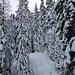 Winter im Fugschtwald