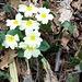 scampoli di primavera