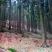Einsamste Forsten im Osterwald, Wildeinstand.