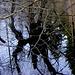 Waldteich im Osterwald
