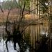 Morgens im Osterwald
