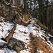 Mal auf Waldpfaden, mal auf Forststraßen geht es bergauf; Orientierungspunkte gibt es kaum.