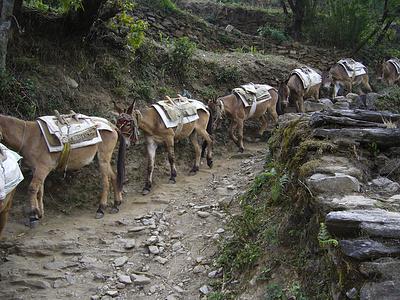 Hier auf mittleren Höhen haben wir meist Esel als Tragtiere angetroffen