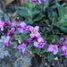 Mountain Spring Flowers I