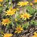 Mountain Spring Flowers IV