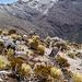 Hinten links ist der Pico Humboldt. Ein Berg, den man gut mit dem Pico Bolivar kombinieren könnte.
