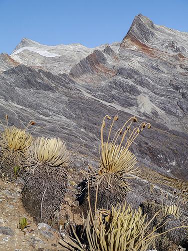 Pico Humboldt und Pico Pamplona.