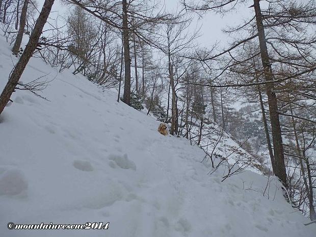 Aufstieg über den Lärchenhang zur Leobnerhütte