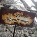 wo sind sie den hin, die Alpenblumen (sehe nur Steine und Holz)