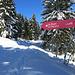 Hier geht es vom Winterwanderweg etwas steiler aufwärts über einen ausgeschilderten Schneeschuhtrail.