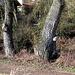 Baumpilze an einem Stamm
