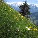 Blumenwiese bei P 1729