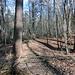 der Abschnitt, der wegen des Gestrüpps und der Waldarbeiten inzwischen kaum mehr zu passieren ist