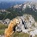 Eine herrliche Rundumsicht belohnt uns für die Mühen des Aufstieges - auch Luca genießt die Fernsicht!