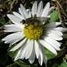 Die Insekten sind auch schon wach im Februar<br /><br />Gli insetti si sono già svegliati in febbraio