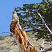 Une faune très riche accompagne le randonneur en Patagonie