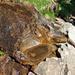 Zwischen Trogen und Innerbärgli: Wasserbecken im Hohgantsandstein