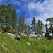 Typischer Wald auf Hohgantsandstein