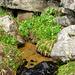 Quelle im Innerbärgli. Ergiebige Quellen sind im Hohgantgebiet selten.