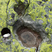 Landkartenflechten auf der Steinigen Matte
