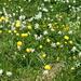 Prächtige Blumenwiesen überall