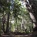 Le large et raide sentier dans la forêt