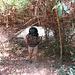 Bambus-Dickicht