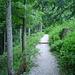 Netter Wanderweg im Wald.