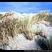 John Dellenbeck (früher Umpqua) Dunes Trail, Oregon Dunes NRA, Oregon, USA