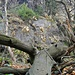<br />Il richiamo della foresta<br /><br />The Call of the Wild<br /><br />Der Ruf der Wildnis<br /><br />L'Appel de la forêt<br /><br /><br />(Jack London)<br /><br />