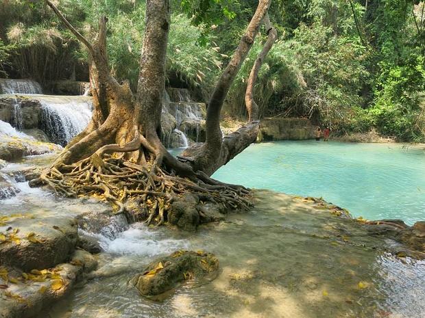 Einer der beiden grössten Pools. Vom Baum im Vordergrund kann ins Wasser gesprungen werden.