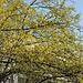 Frühling mitten in der Stadt