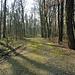 nur wenige Meter weiter, pure Natur im Hardwald