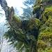 der Farngarten auf dem Baum