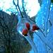 <br />Dog Roses' Winter Walk
