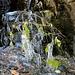 <br />Im Winter haben die meisten Blätter nur Flausen im Kopf.<br /><br /><br />♩♫♬...Tiroli Tirola...♫♩♬<br />[http://www.youtube.com/watch?v=N0xT43QWUF0]
