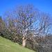 Bäumig verzweigter Baum!