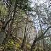 Wildes Gelände, die Nordhänge sind vielfach bemoost während es auf den südseitigen Abhängen trocken ist, was auch an den Pflanzengesellschaften auf den Felsköpfen ablesbar ist