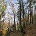 Wo Wald und Wild sind, sind die Heger und Pfleger nicht weit