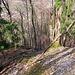 Den Gämsen hinterhergeblickt, aber nicht mehr gesehen. Auf jeden Fall weiß ich jetzt aber, dass die bisherigen [http://www.hikr.org/gallery/photo1129546.html?post_id=66236#1 Informationen] über Gämsen im Donautal keine Legende sind.