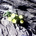 In der Spur des Eisenbahngleises haben es doch tatsächlich diese Blumen geschafft, quasi aus dem Stein zu wachsen.
