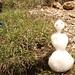 Nochmal Schneemann - neben Enzian